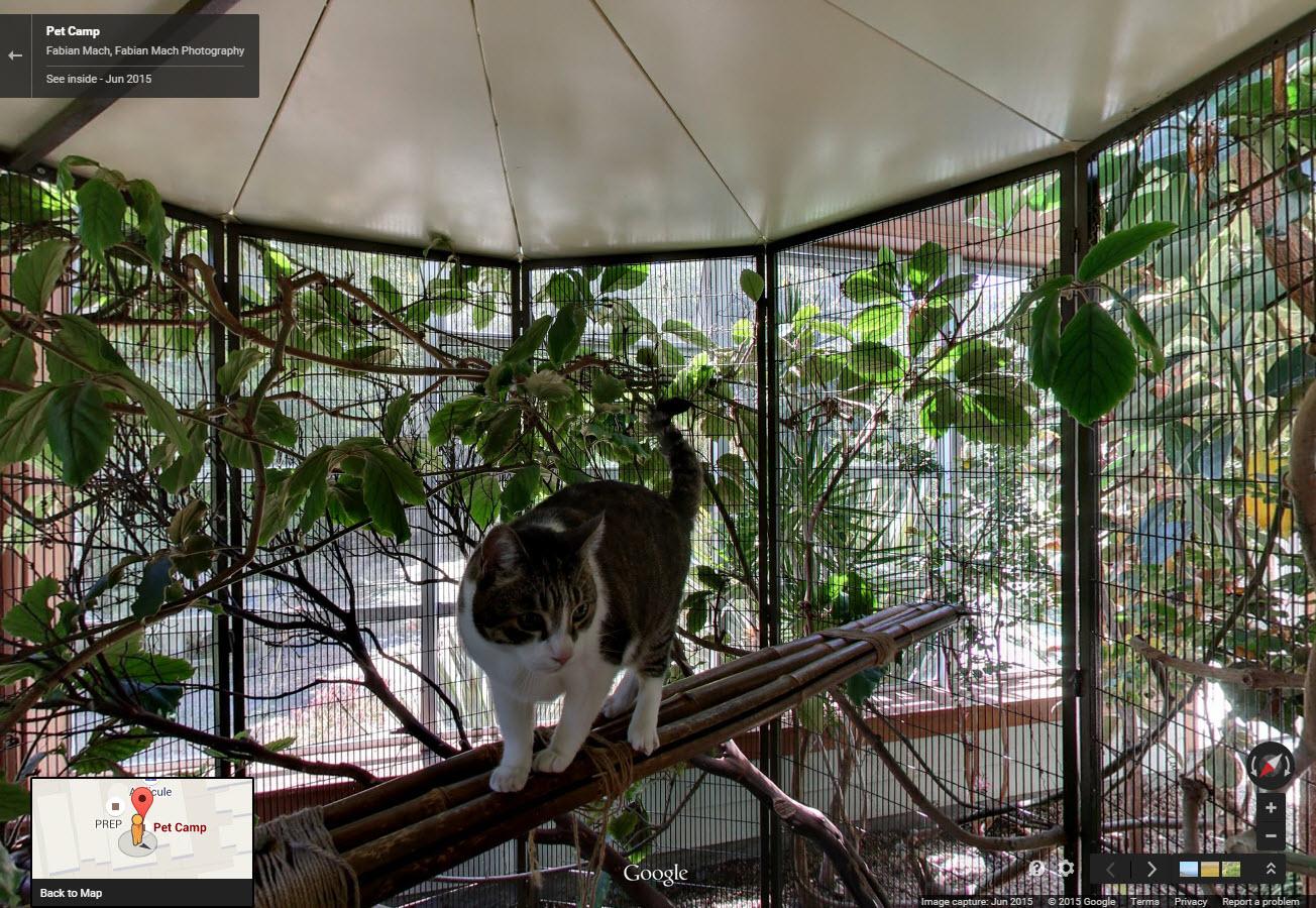 Pet Camp SF